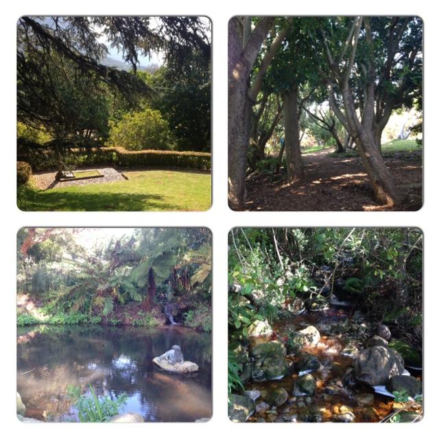 kirstenbosch-garden-collage