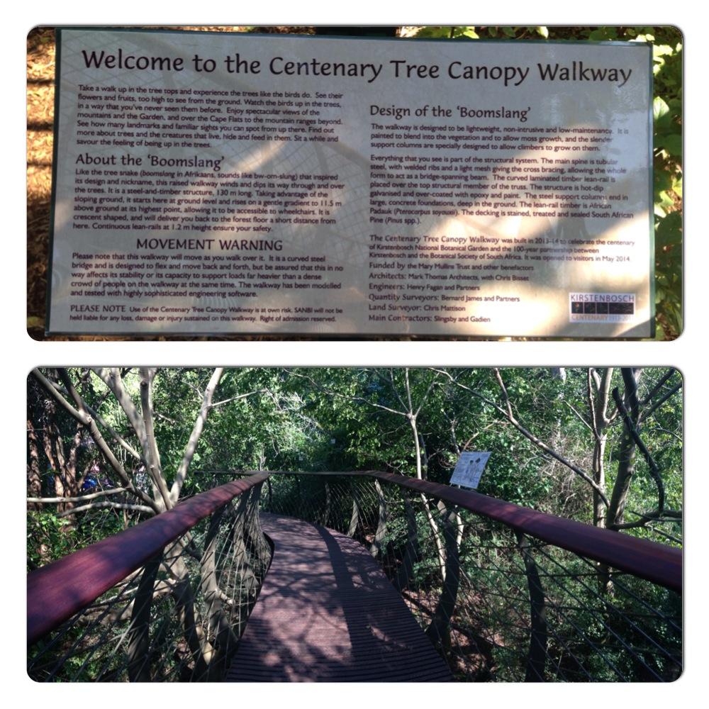 tree canopy walkway kirstenbosch